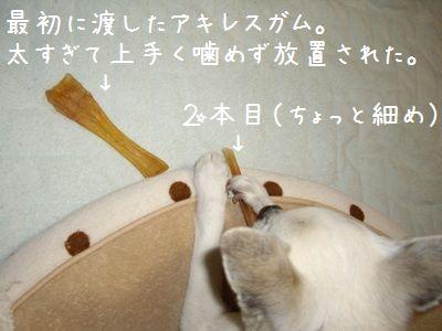 至福ガム2