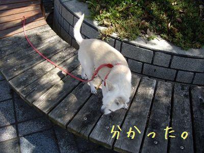 愉快な散歩8