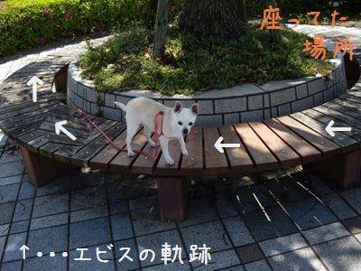 愉快な散歩7