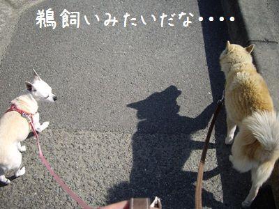 2ワンと散歩1