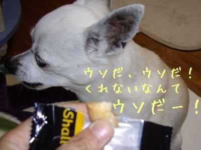 クッキーとエビス6