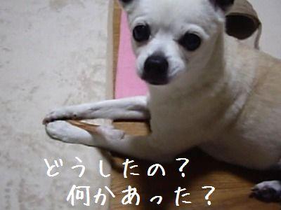 どした?2