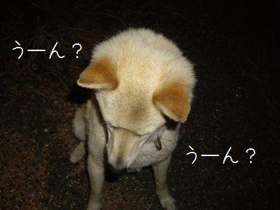 あんぽん3