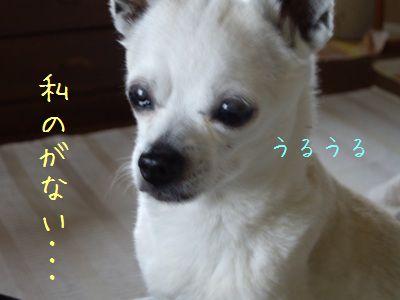 ぴっぴさん6