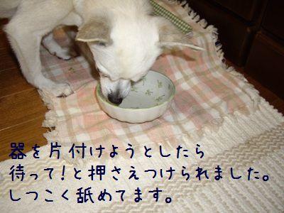 麻酔後の食事5
