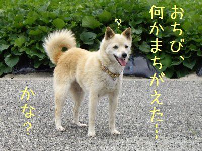 おちび通信3