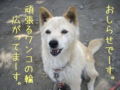 おちび通信5