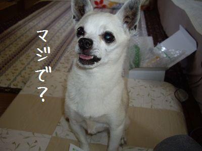 沖縄から6