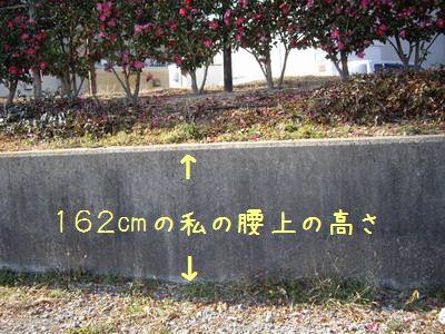 IMGP5700.jpg