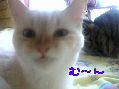 img_1450498_39939408_3.jpg