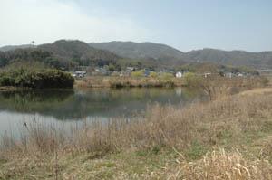 芦田川の川辺