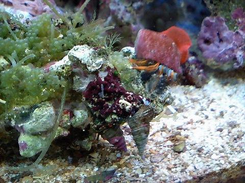 海藻付ライブロック090103_02