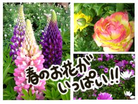 春の花苗いっぱい!
