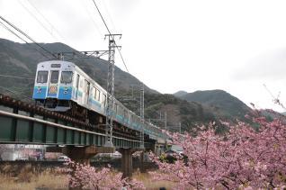 2011年2月27日 伊豆急行線 8000系