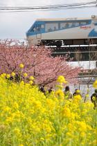2011年2月27日 伊豆急行線 2100系