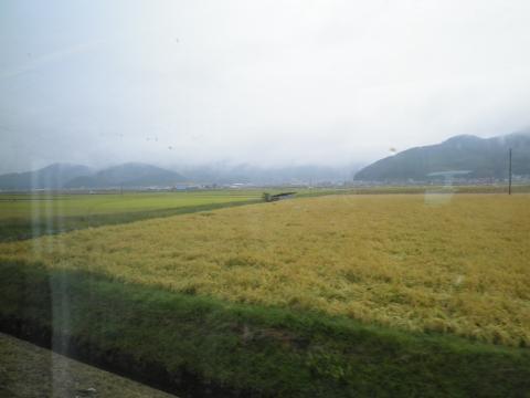卯之町の稲田118