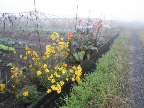 黄色の花04