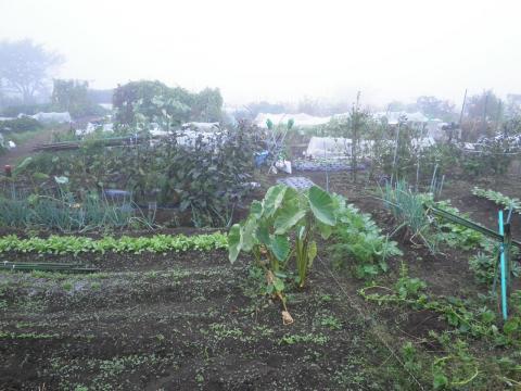 野菜畑23