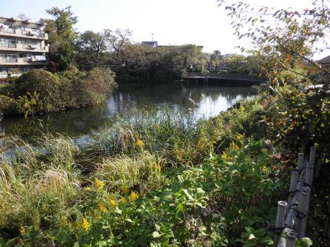 秋の池03
