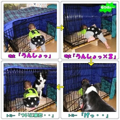 cats2011-2-11-2.jpg