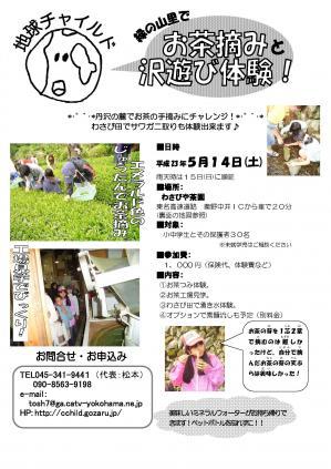 地チャ 11お茶摘み(案内)
