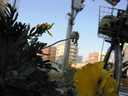 道端の花プランター