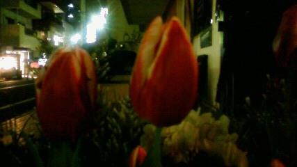 夜のチューリップ 2