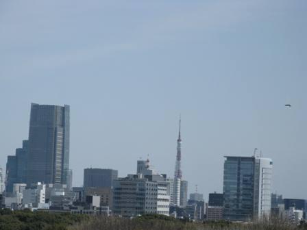カラスと東京タワー