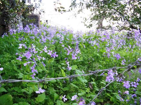 春の紫と緑