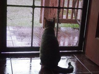 趣味は外を眺めることです