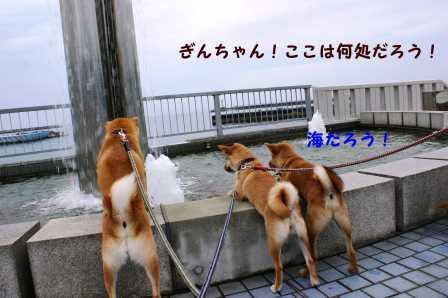 2008_10110008.jpg