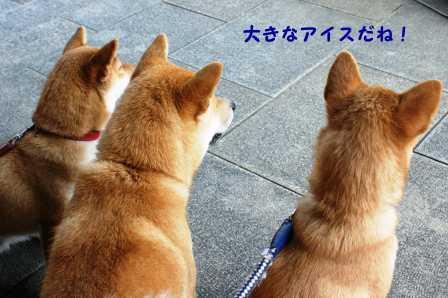 2008_10110015.jpg