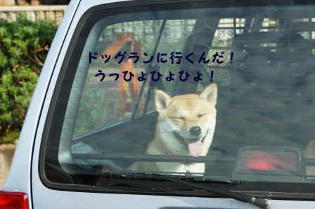 2008_10110021.jpg