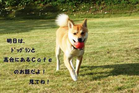 2008_10110036.jpg