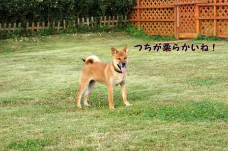 2008_10110053.jpg