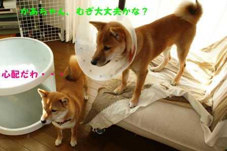2008_10180192.jpg