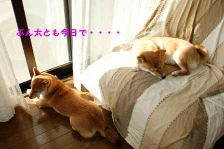 2008_10180196.jpg
