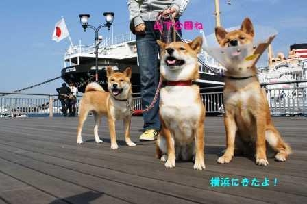 2008_10180204.jpg