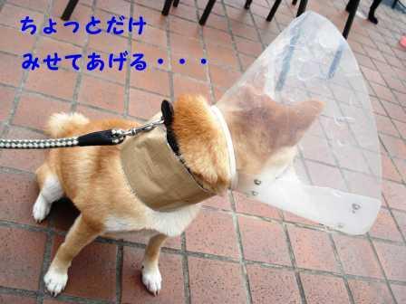 2008_10250072.jpg