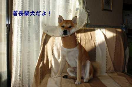 2008_10270041.jpg