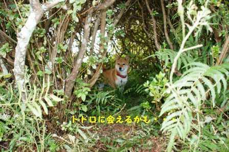 2008_11020052.jpg
