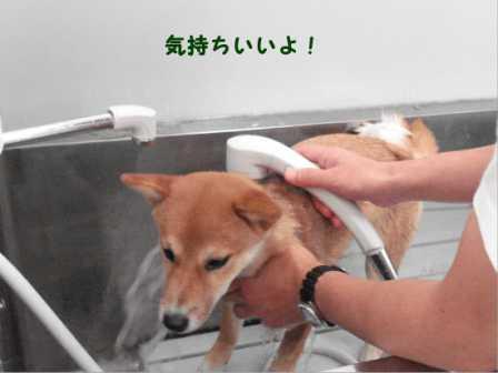2008_11080110.jpg
