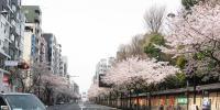 @yasukuni_sakura_yasukunidouri_ichigayahoumen.jpg