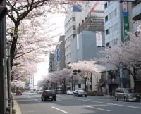 @yasukuni_sakura_yasukunidouri_kudanhoumen.jpg