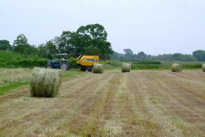 牧草の収穫 (640x427)
