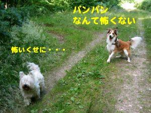 2008071618.jpg