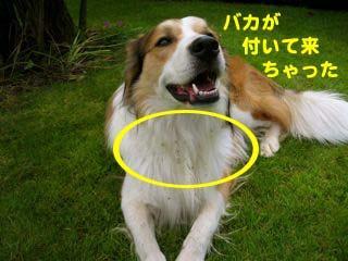 2008072003_convert_20080721043619.jpg
