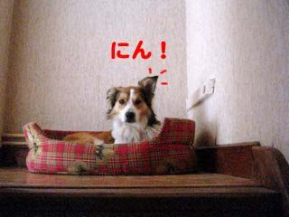 2008072007_convert_20080721044132.jpg