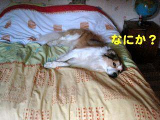 2008072008_convert_20080721044607.jpg