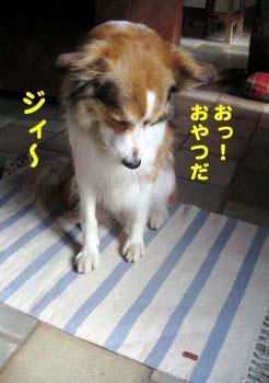 2008072101_convert_20080721174333.jpg